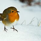 Robin by Steve  Liptrot