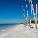 a walk along the beach by kathy s gillentine