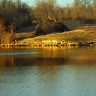 Baltz lake at the golden hour. by Susan Blevins