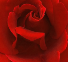 Perfectly Sexy Beautiful Red Rose, Rock this!! Sticker