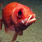Squirrelfish portrait by George Cathcart