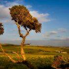 Serengeti Devon by JayteaUK