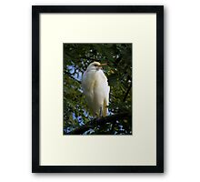 Perched On A Tree Framed Print