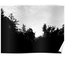 Black and White Trees Poster