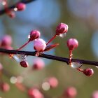 Spring budding out.. by aussiedi
