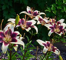 Purple And White Lilies by Sandra Foster