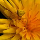 Yellow on Yellow by spaceargonot
