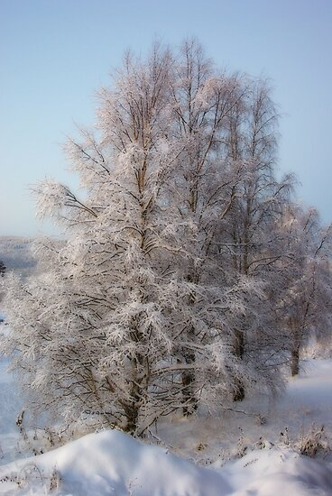 Winter Birch #2 by MarianaEwa
