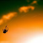 Crawling in the Sky by Ronny Theeuwes