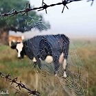 View through the web by Kat36
