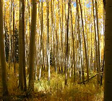 Yellow Aspen Forest by susannamike