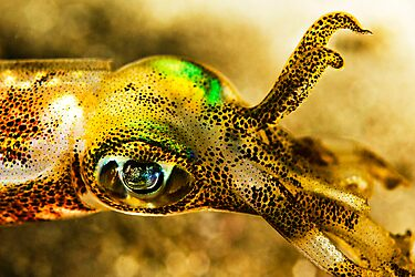 Squid Eye by Dan Sweeney