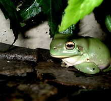 Froggie by elizabethrose05