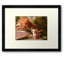 Miamira Magnifica Nudibranch Framed Print