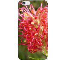 Grevillea banksii Forsterii iPhone Case/Skin