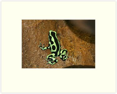 Poison dart frog by orchidcat