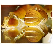 THE GOOSEBERRY - Physalis Solanaceae Poster