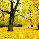 Hannover Autumn by Scott Chalmers