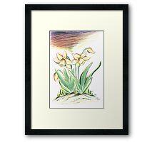 Glorious Daffodils Framed Print