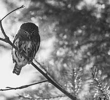 Owl in the Pixel Snow by JoshuaStomberg
