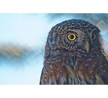 Excellent Owl is Excellent Photographic Print