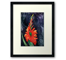 watercolor drawing of red gladiolus Framed Print