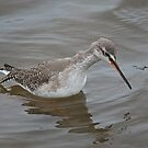 Spotted Redshank by Jamie  Green