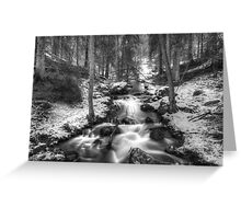 Stream in forest Greeting Card