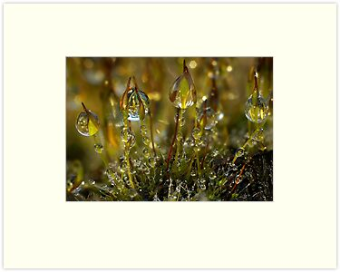 Dewdrops on Moss by Gazart