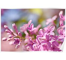 Lilac flowerets bright pink Poster