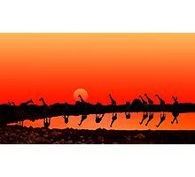 SUNSET WITH GIRAFFES Photographic Print
