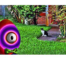 Saturated Egg Man getting Judged by the Neighborhood Cat Photographic Print