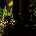 paradisiac garden - jardin paradisíaco by Bernhard Matejka