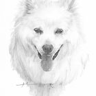 white eskimo dog drawing by Mike Theuer