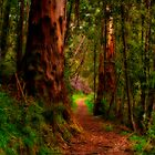 """""""The Pathway"""" by Phil Thomson IPA"""