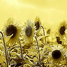 *Sunny Sunflowers* by Darlene Lankford Honeycutt