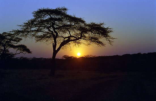 Sunrise over Serengeti, Tanzania by Bev Pascoe