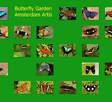 Butterflies Of The World by Robert Abraham