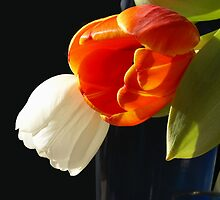 Glowing tulips  by CanDuCreations