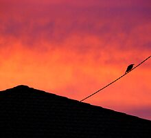 Bird on a wire by Alyssa Barwick