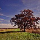 A Grand Tree by vigor