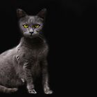 Gray Cat by Kimberly Palmer