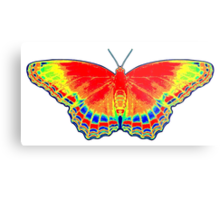 Colorful Butterfly - Red Metal Print