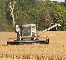 wheat harvest by michelle bergkamp
