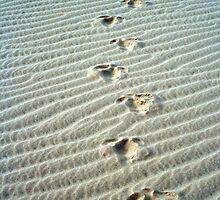 emu tracks, mungo national park, nsw australia by Peter  Middleton