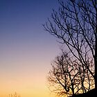 Tree at the sunrise (2) by becks78