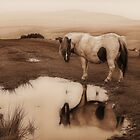 Dartmoor Pony by BlueRoom