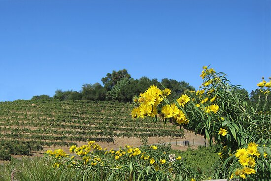 Sonoma California Vineyard With Daisies by Zehda