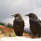 Southwest Ravens by kerplunk
