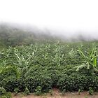 Coffee Plantation  by SusanGBurns